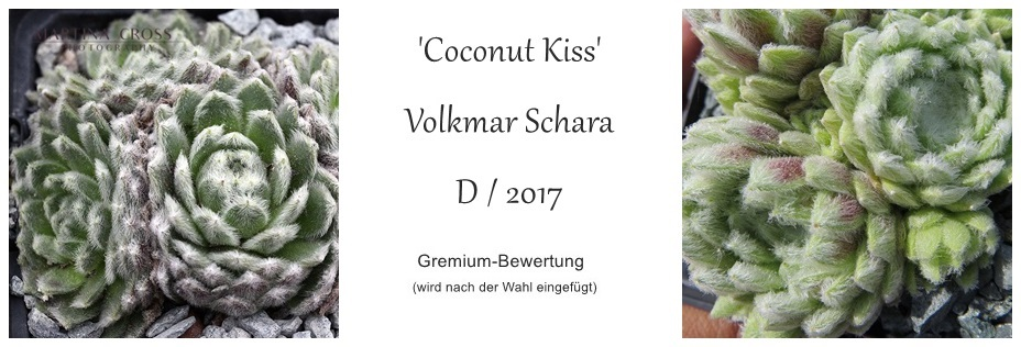 Coconut_Kiss.jpg